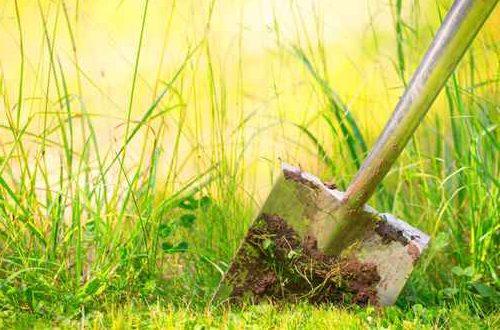 Professioneller Gartenbau: Fachgerechte Ausführung, kompetente Ansprechpartner vor Ort, Terminverlässlichkeit. Das ist Freiformat.